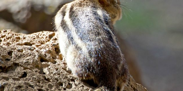 Animal symbolism: Seeing an animal multiple times